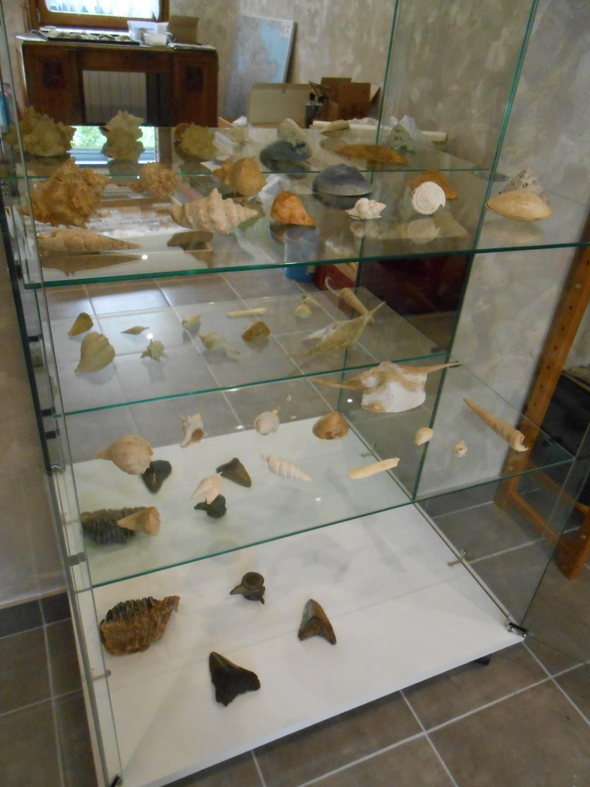 Musee - vitrine2