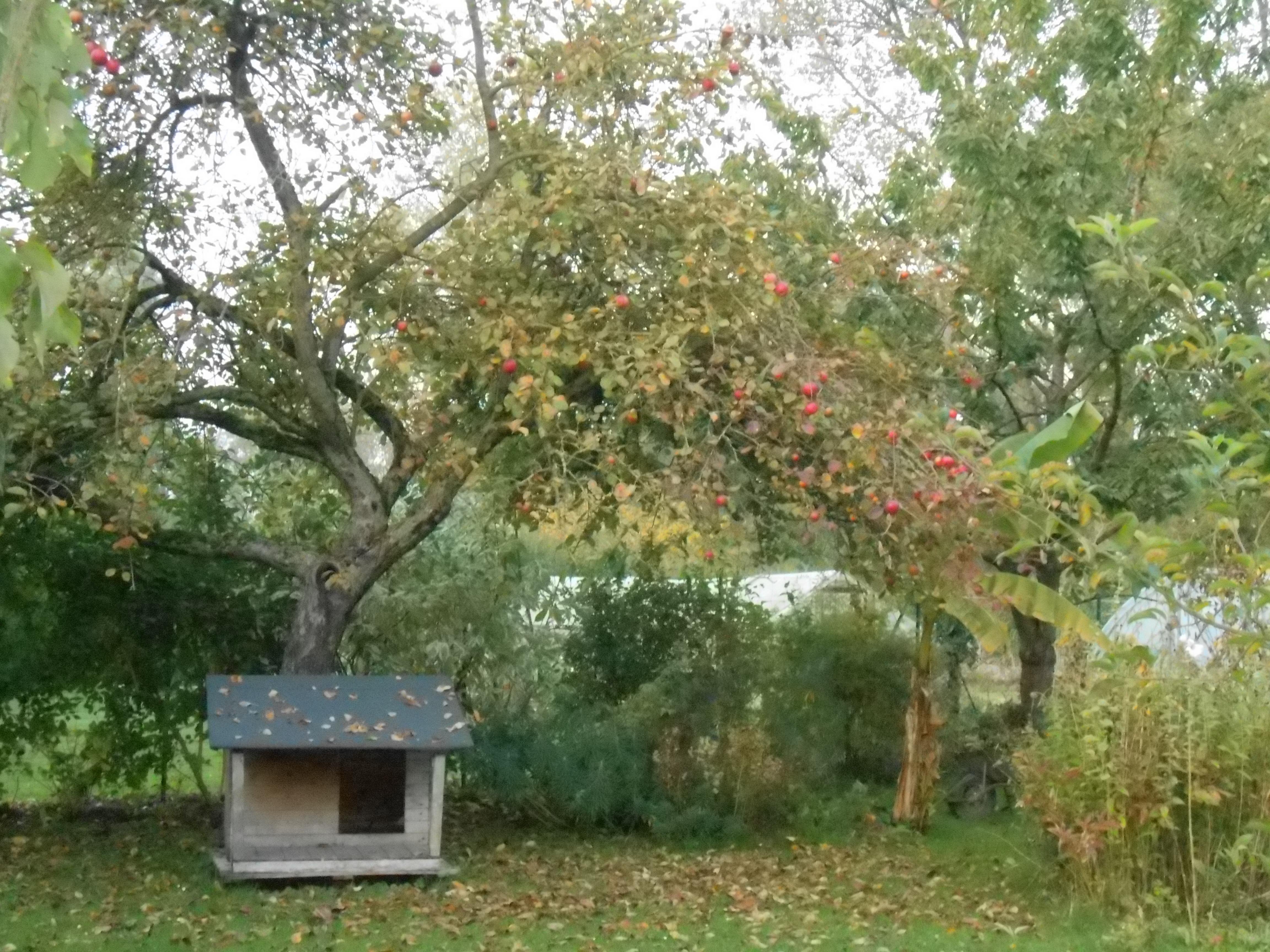 Jardin-automne-vue7